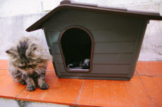 Outdoor Shelters for Multiple Cats: From Basic to Heated Pet Houses