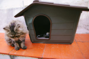 porthos-and-bjorn-playing-with-new-cat-house