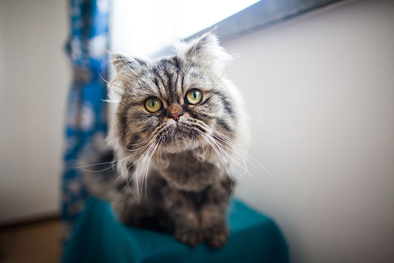 bjorn-our-new-pet-cat