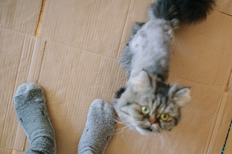 cats-obsession-with-feet-ankle-attraction