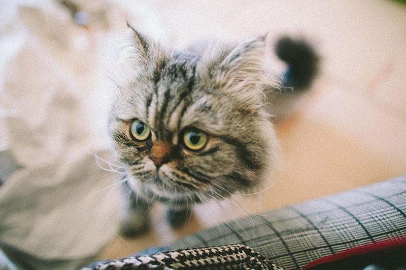 kitty-cat-sometimes-bite-attack-legs-feet