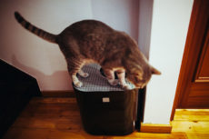 Corner Cat Litter Boxes: From Pans to Covered Hood Lids, Small to Large