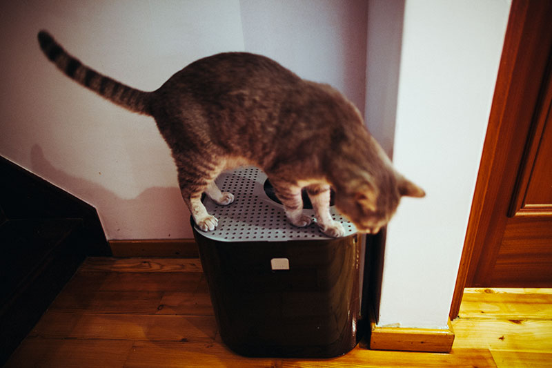 cat-using-corner-litter-box-modkat-top-entry
