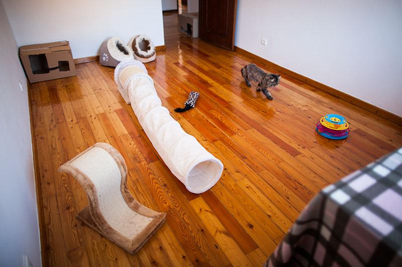 cat-room-full-view-play-sleep-fun