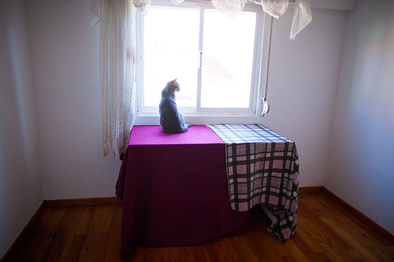 cat-room-window-view-cat-table-tent