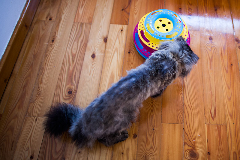 cat-playing-trixie-cat-circle-tower-catch-the-balls-toy