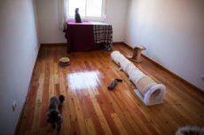 The Current Cat Room: Featuring a Super Easy to Replicate XXL Cat House
