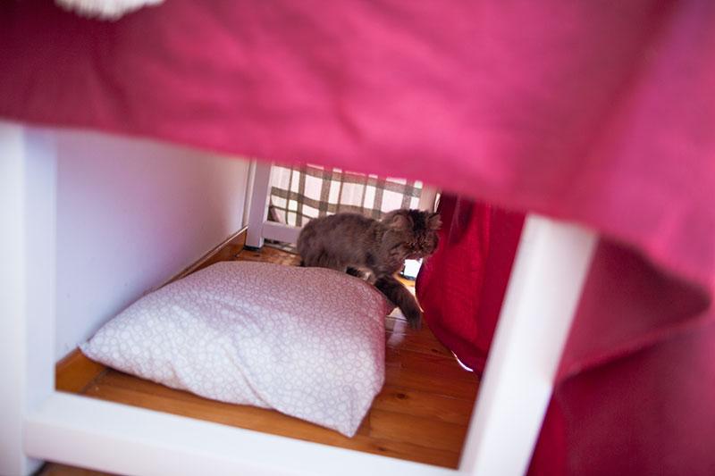 inside-diy-desk-blanket-cat-tent-tunnel