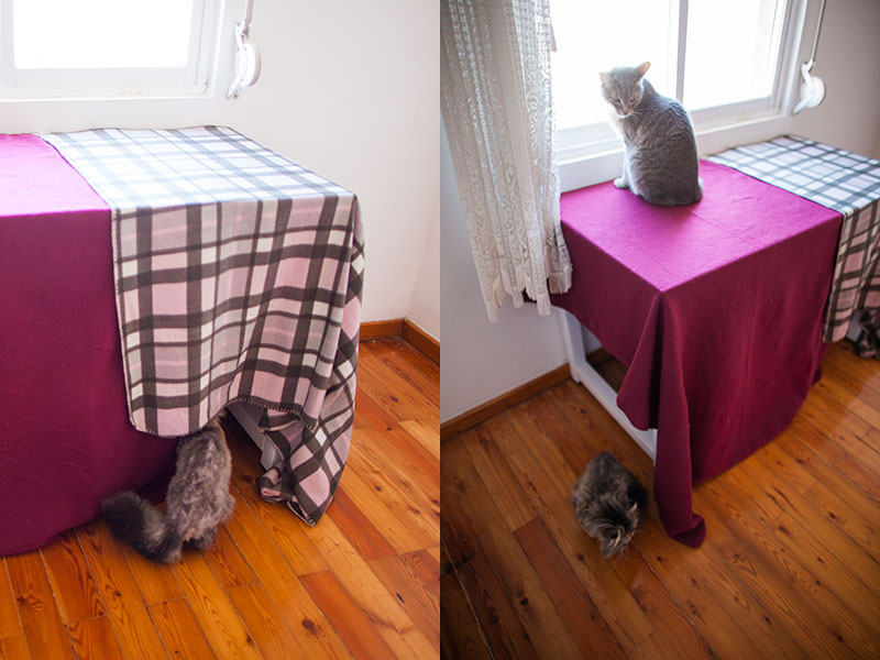 cat-going-in-and-out-of-diy-cat-condo-tent-blankets-and-table