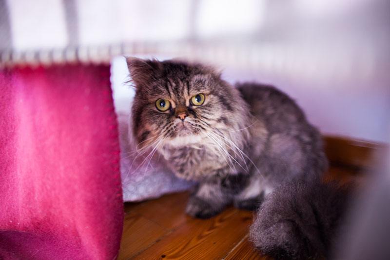 cat-hiding-inside-diy-cat-condo-cute-easy-diy-trick
