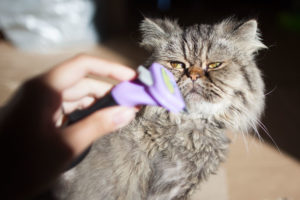 best-brush-for-cats-with-long-hair-furminator