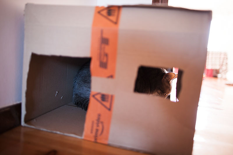 cat-condo-slits-for-windows-cardboard-diy-easy