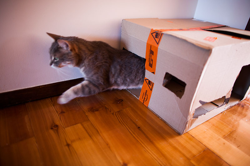 easy-to-make-cardboard-cat-houses-for-multiple-cats