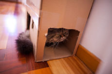 A DIY Formula to Create the Purrfect Multi-Cat Cardboard Box Condos
