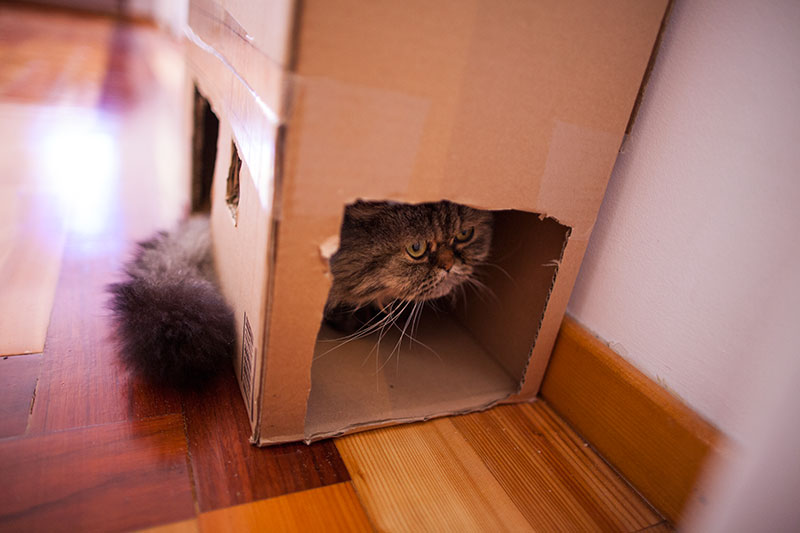 cat-sitting-in-cardboard-house-multi-cat-condo-