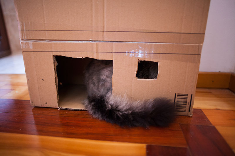 cat-tail-hanging-outside-cardboard-cat-house-door