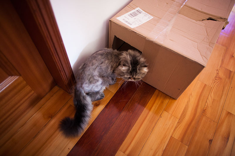 cat-entering-multi-cat-condo-cardboard-box-diy