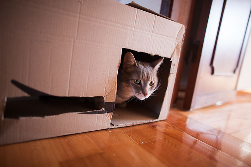 quick-and-easy-cat-condos-diy-cardboard-box-multiple-cats