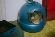 Dig Dome Litter Boxes? Petmate Boodas (Original, CleanStep, Pearl) & More