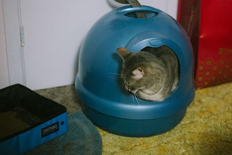 petmate-booda-dome-cat-litter-box