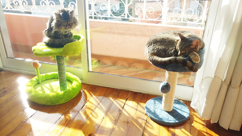 two-cats-sitting-on-one-small-cat-tree-each