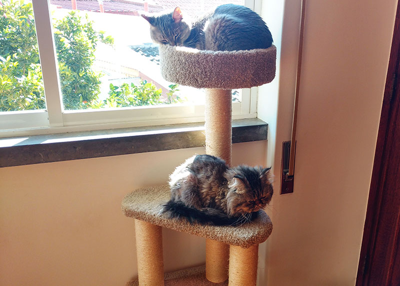 two-cats-sleeping-together-on-amazon-basics-tree