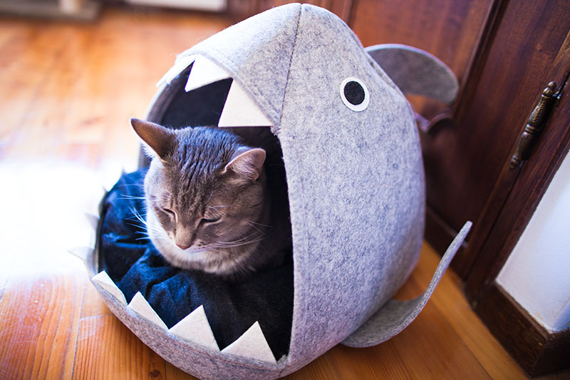 picture-being-eaten-by-shark-cat-bed