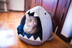 Help – My Cat's Being Eaten! Shark Cat Beds so Cute, I Had to Grab One