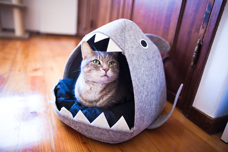 shark-cat-bed-kitty-being-eaten-cute-pose
