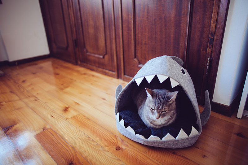 grumpy-cat-sitting-in-shark-pet-bed