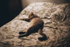Do Your Cats Sleep at the Foot of the Bed? Mine Do! Why? 7 Theories