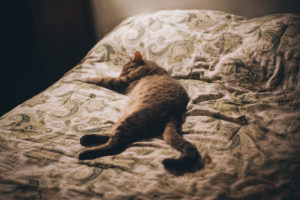 cat-stretched-out-sleeping-atop-bed-covers