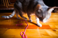 Why Do Cats Like String? What Makes It Fun to Watch & Play With?