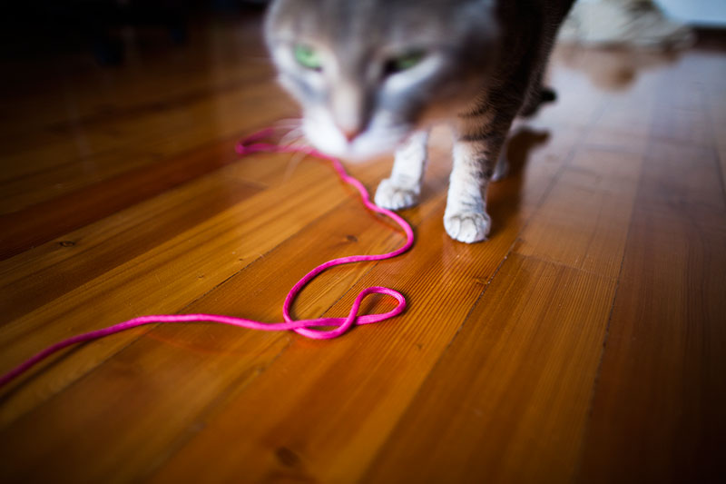 why-do-cats-love-string-so-much-playing