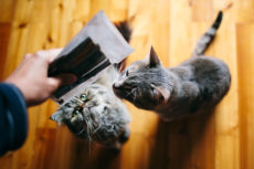 Microchip Feeders for Cats: Preventing Pets from Eating Each Other's Food