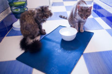 No Spill Cat Water Bowls: Spill Proof Dishes, Some Heavy & Weighted