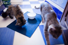 Why Cats Spill Water from Bowls: Paw, Play, Splash, & Knock Over Behaviour
