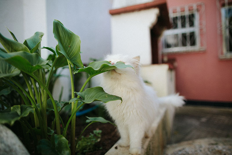 outdoor-cat-sniffing-plant