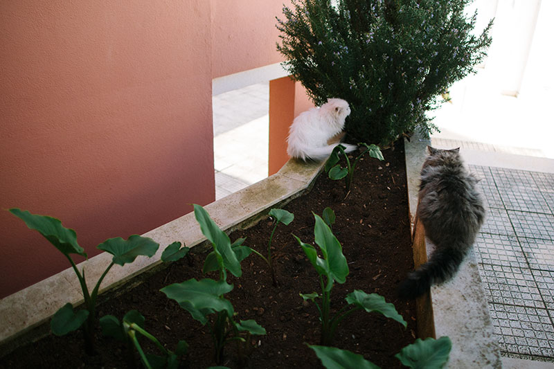 outdoor-cats-sitting-outside-use-soil-as-litter-box