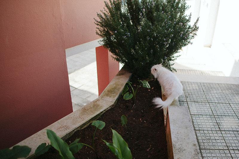 outdoor-cats-using-soil-as-litter-box