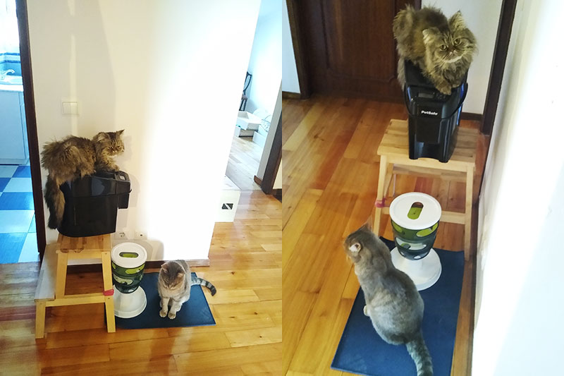 cat-sitting-on-pet-safe-automatic-feeder