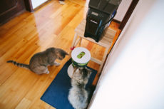 Timed Cat Feeders: Preventing Hunger & Eating Too Much, Too Quickly