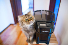 PetSafe Healthy Pet Simply Feed Automatic Cat & Dog Feeder Review