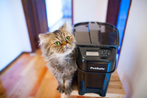 petsafe-healthy-pet-simply-feed-automatic-cat-feeder