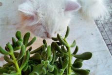 Houseplant Protection: Cat Proof Planters, Pots, Shelves, & More