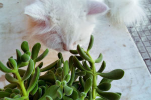 cat-sniffing-house-plant-how-to-cat-proof-planter-pots