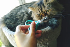 Cat's Nail Split? (Maybe While You Were Trimming?) Here's What to Do
