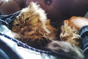 cat-sleeping-on-his-human