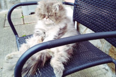 Why Do Cats Sit like Humans Sometimes? 12 Plausible Explanations