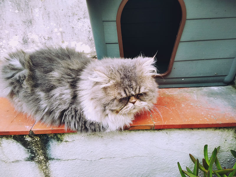cat-sleeping-in-front-of-outdoor-shelter